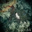 天月-あまつき- Ark