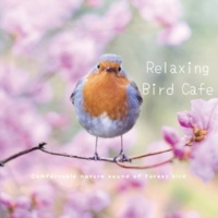 VAGALLY VAKANS ゆったりのんびりバードカフェ | Relaxing Bird Cafe ~ Comfortable nature sound of forest bird