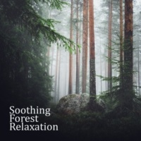 Mother Nature Sound FX, Therapeutic Music Zone Soothing Forest Relaxation
