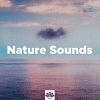 Inside Trace & Sounds Of Nature: Thunderstorm, Rain Nature Sounds