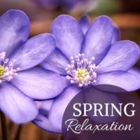 Spring Awakening Spring Relaxation - Harp & Chirping Birds for Welcoming a New Season, Zen Music