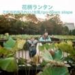 花柄ランタン ごがつのゆうれい・台風・go down slope