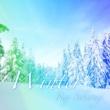 桜木 玲 Winter