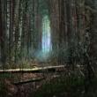 Minimal Soundscape Mystery Woods