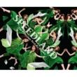 SPEED SPEEDLAND -The Premium Best Re Tracks-