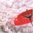 彩冷える 桜舞う季節に