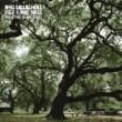 Noel Gallagher's High Flying Birds ザ・ダイイング・オブ・ザ・ライト
