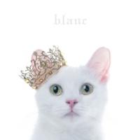 "Aimer BEST SELECTION ""blanc"""