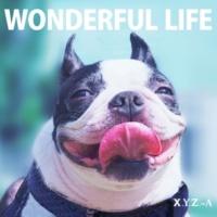 X.Y.Z.→A WONDERFUL LIFE