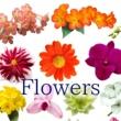 ヒーリングピアノJAPAN Flowers