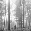 テイラー・スウィフト folklore