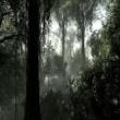 SURVIVALIST #1 Rainforest