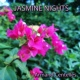 Armand Centelles Jasmine Nights